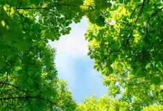 zostaw niebo zielony niebieski Zdjęcie Royalty Free