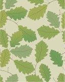 zostaw oak royalty ilustracja