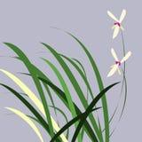 zostaw orchidea ilustracji