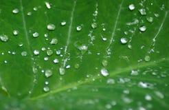 zostaw podeszczową tła wody Obraz Royalty Free