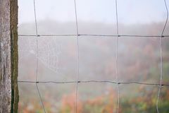 zostaw spider web obrazy stock