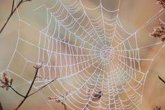 zostaw spider web zdjęcie stock