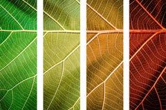 zostaw strukturę liść abstrakcyjne tło Zamyka up liść tekstura Fotografia Royalty Free