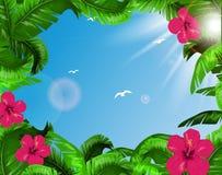 zostaw tropical Fotografia Stock