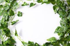 zostaw tropical green zostało białe tło Tropikalny pojęcie Zdjęcie Stock