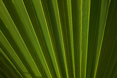 zostaw tropical Kwiecisty zielony tło Fotografia Stock