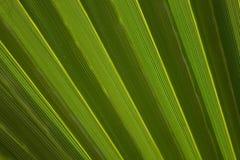zostaw tropical Kwiecisty zielony tło Obraz Royalty Free