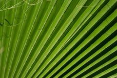 zostaw tropical Kwiecisty zielony tło Obrazy Stock