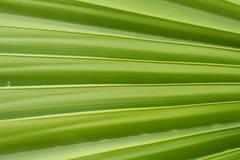 zostaw tropical Kwiecisty zielony tło Obraz Stock