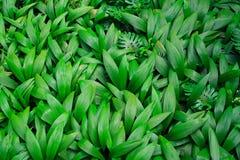 zostaw tropikalnych green Fotografia Stock