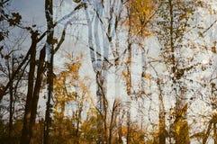 zostaw upadek naturalną strukturę wibrująca fotografia stock