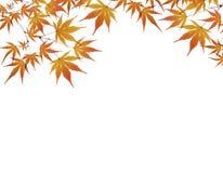 zostaw występować samodzielnie jesieni white obraz stock