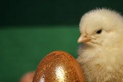 Złoty jajko i kurczątko Zdjęcia Stock