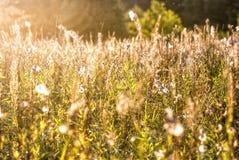 Złoty pole, ranek jesieni światło Obrazy Royalty Free