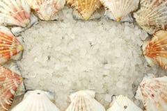Zout en shells Stock Afbeeldingen