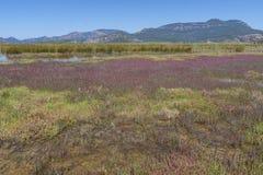Zout moeras bij de zomer in het Middellandse-Zeegebied met bergen op de achtergrond stock foto