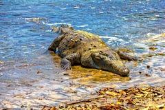 Zout waterKrokodil Stock Fotografie