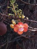 Zoutboom een andere artistieke verwezenlijking van moederaard Royalty-vrije Stock Fotografie