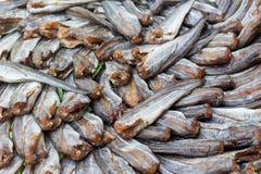 Zoute Droge vissen in Thailand Royalty-vrije Stock Afbeelding