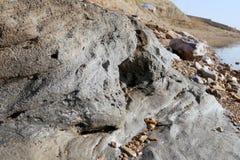 Zoute kristallisatie bij kust van het Dode Overzees, Jordanië royalty-vrije stock afbeelding