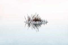 Zoute kristallisatie op het Dode Overzees royalty-vrije stock foto's