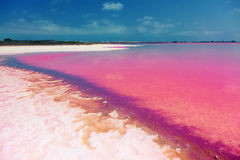 Zoute meerkust Stock Foto's