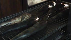 Zoute vissen bij de grill liggen of rooster die in rookhok of rookoven voor het roken wordt geplaatst die stock footage