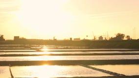 Zoute vlakten van Aveiro bij zonsondergang stock videobeelden