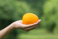 Zrównoważony diety jedzenie świeżego produktu organicznie pomarańcze na ręce zdjęcie royalty free