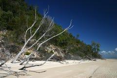 zredukowany drzewo na plaży obrazy royalty free