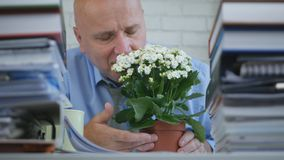 Zrelaksowany biznesmen Wącha Pięknego kwiatu w biurze zdjęcia stock