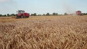 Zrenjanin, SÉRVIA em agosto de 2013: Colheita do trigo video estoque