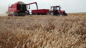 Zrenjanin, SÉRVIA em agosto de 2013: Colheita do trigo vídeos de arquivo