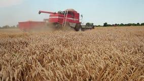Zrenjanin, SERBIA- August 2013:  Wheat Harvest stock footage