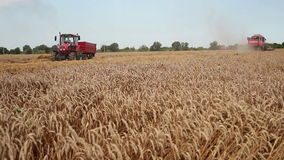 Zrenjanin, SERBIA- August 2013:  Wheat Harvest stock video