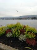 Zürich Lake Royalty Free Stock Photo
