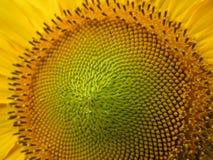 09 20 zrobili słonecznika rok ziarno tematom Obrazy Royalty Free