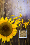 09 20 zrobili słonecznika rok ziarno tematom Obrazy Stock