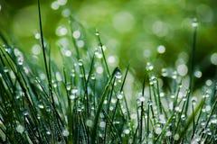 Zroszona zielona trawa, zamazany tło Fotografia Stock