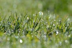Zroszony trawy tło Fotografia Royalty Free