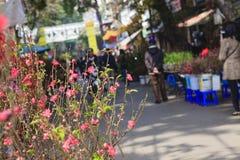 Zrozumienia Luoc kwiatu rynek Brzoskwinia kwiaty, brzęczenia Noi Wietnam Fotografia Stock