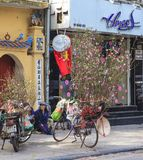 Zrozumienia Luoc kwiatu rynek Brzoskwinia kwiaty, brzęczenia Noi Wietnam Zdjęcie Royalty Free