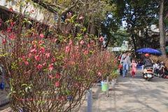 Zrozumienia Luoc kwiatu rynek Brzoskwinia kwiaty, brzęczenia Noi Wietnam Obraz Royalty Free
