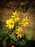 Zrywań wildflowers fotografia royalty free
