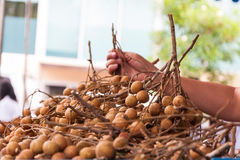 Zrywania longan wiązka od longan stosu Zdjęcia Royalty Free