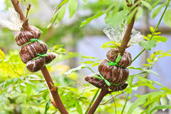 Zu den Baum verpflanzen Lizenzfreies Stockfoto