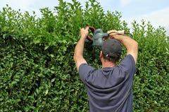 Zu eine Hecke, arbeitend befestigen im Garten Lizenzfreie Stockbilder