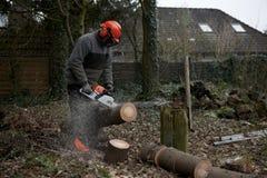Zu einen Baum schneiden Lizenzfreies Stockfoto