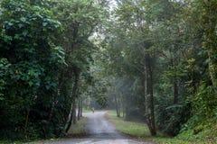 Zu im Wald Stockfoto