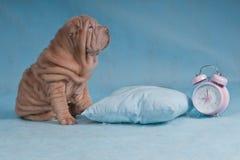 Zu oder nicht zum Schlaf schlafen? Stockfotos